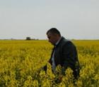 Konya Şeker 3 ilçe ve 22 köyde sözleşmeli kanola üretimi yaptırıyor.